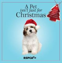 a-pet-isnt-just-for-christmas